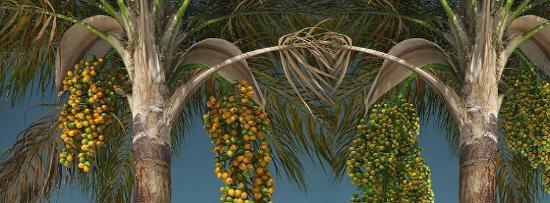 Skapa 3D-vegetation med The Plant Factory