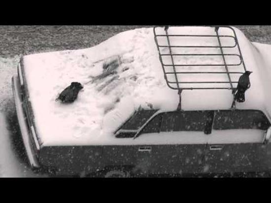 Kråkor som har kul på snöig bil